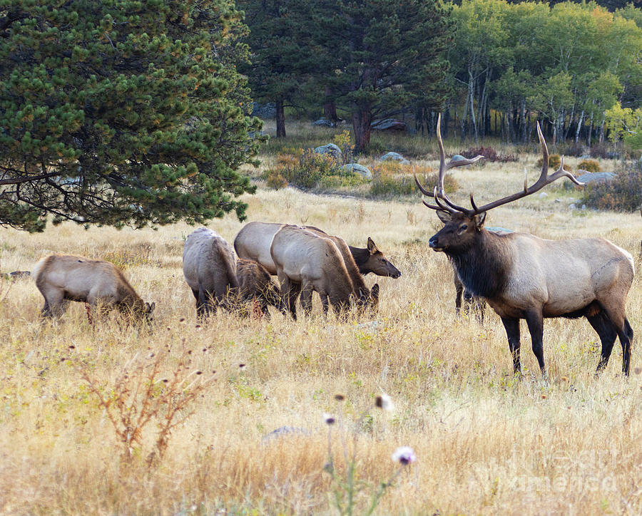 Herd Of Elk On A Foggy Morning Photograph