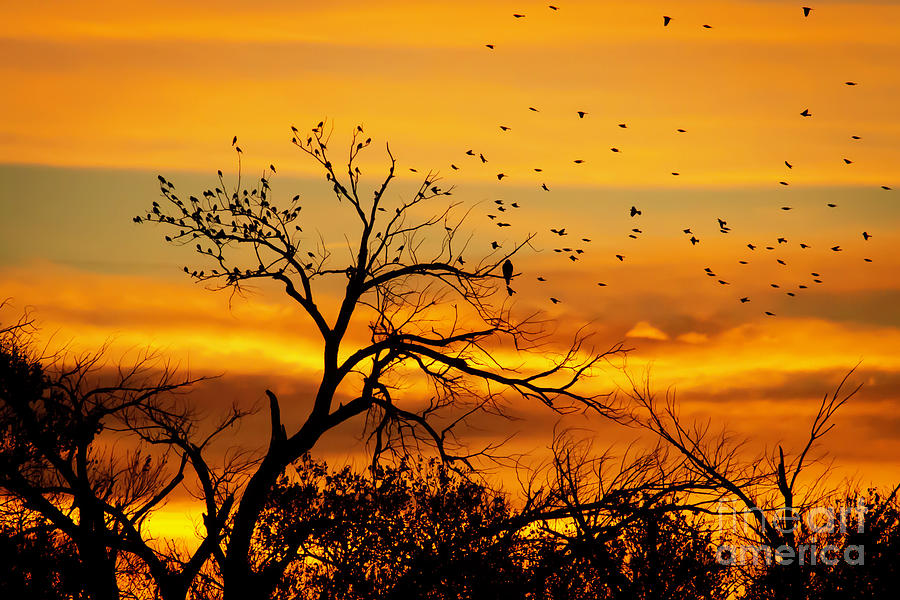 Here Come the Birds at Sunrise by Sabrina L Ryan