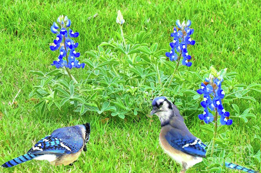 Here come the Bluebonnets by Janette Boyd