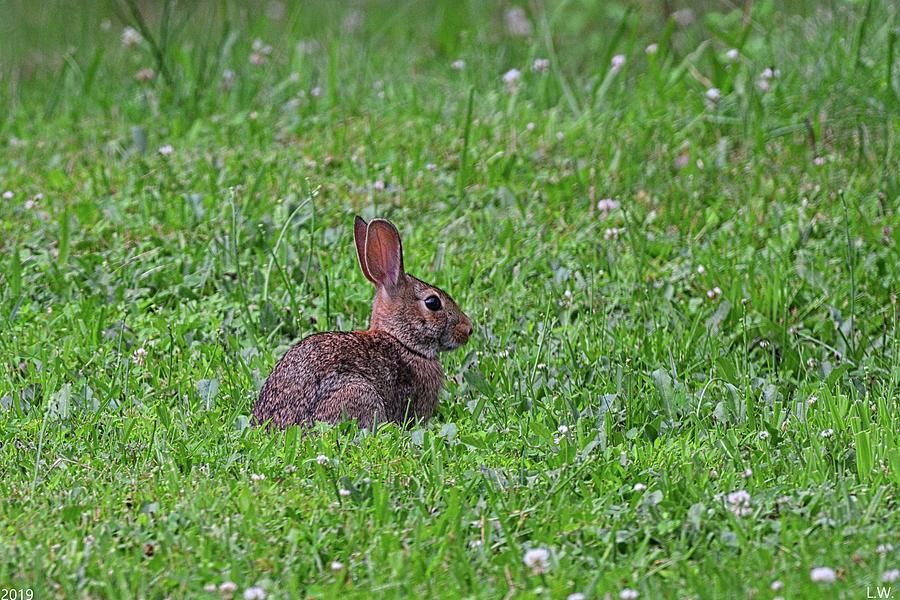 Here Comes Peter Cottontail by Lisa Wooten