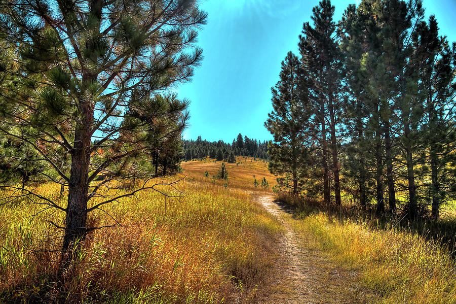 Heritage Trail by David Patterson