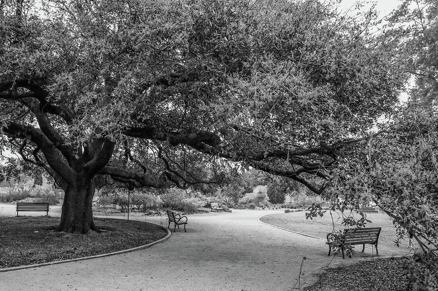 Hermann Park Black And White by Dan Sproul