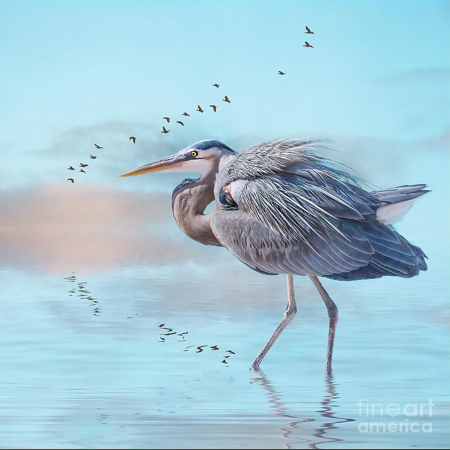 Heron at sunrise by Brian Tarr