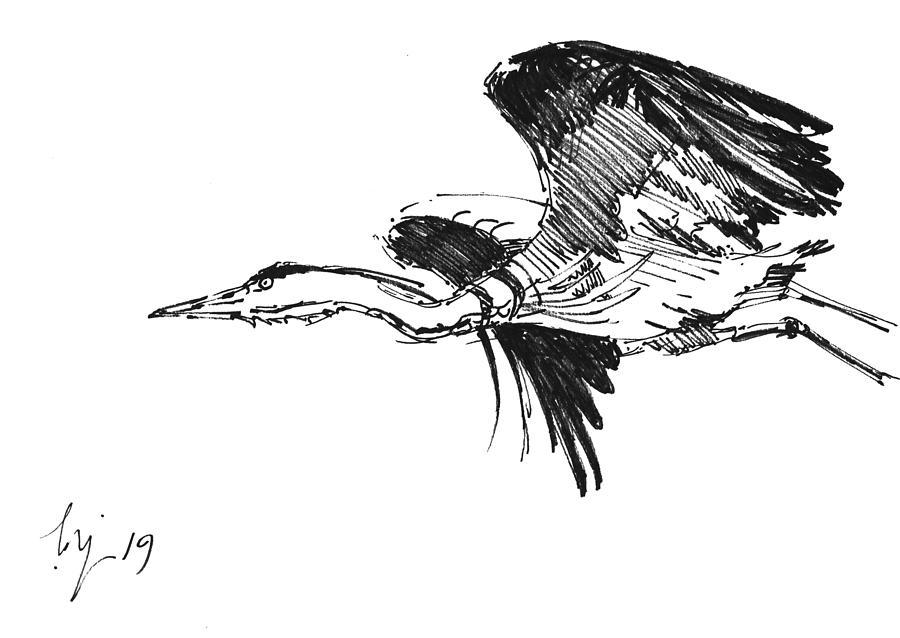 Heron in flight drawing by Mike Jory