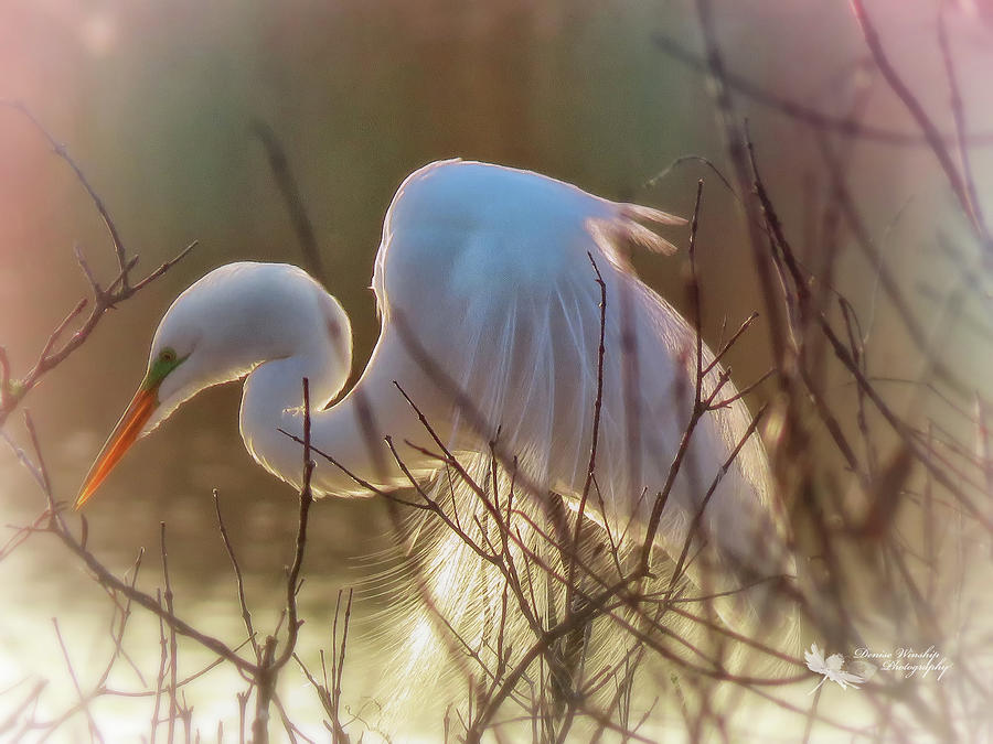Heron in Morning Glow by Denise Winship