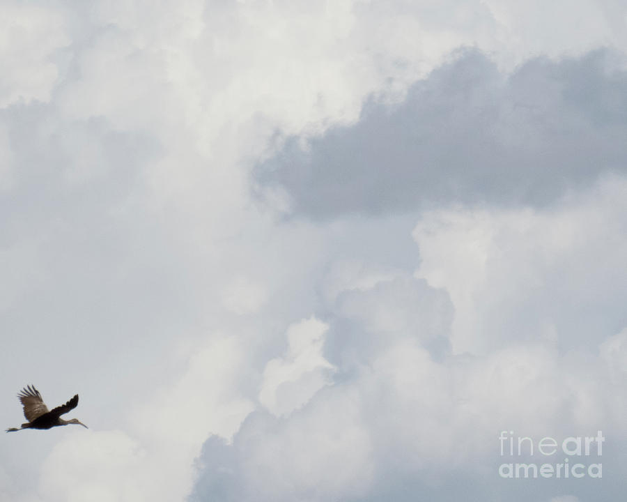 Crane in the clouds by Christy Garavetto