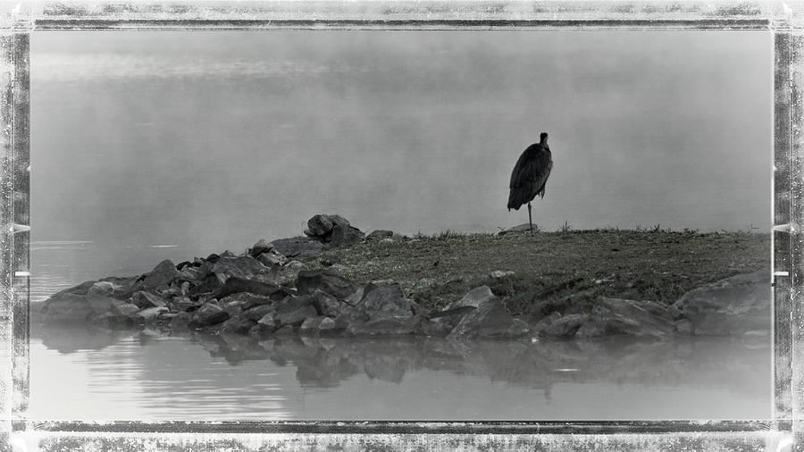 Heron In The Mist by John Benedict