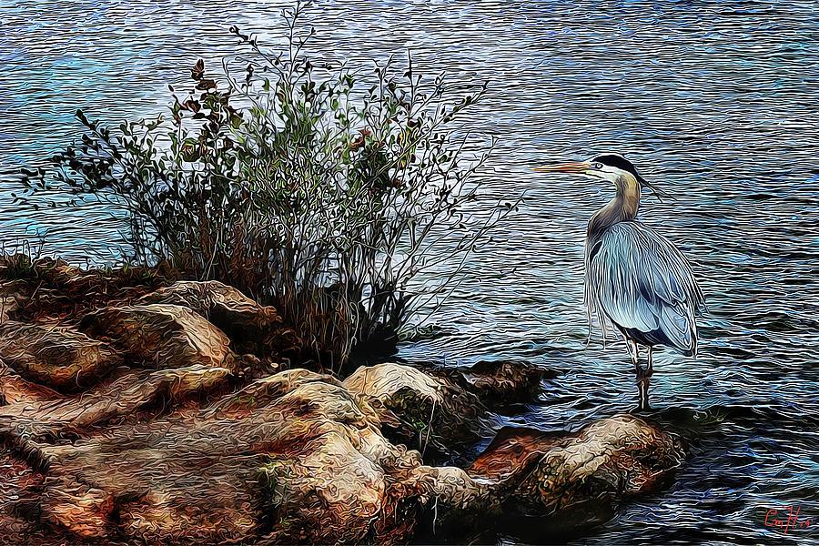 Heron Island by Christina M Hale
