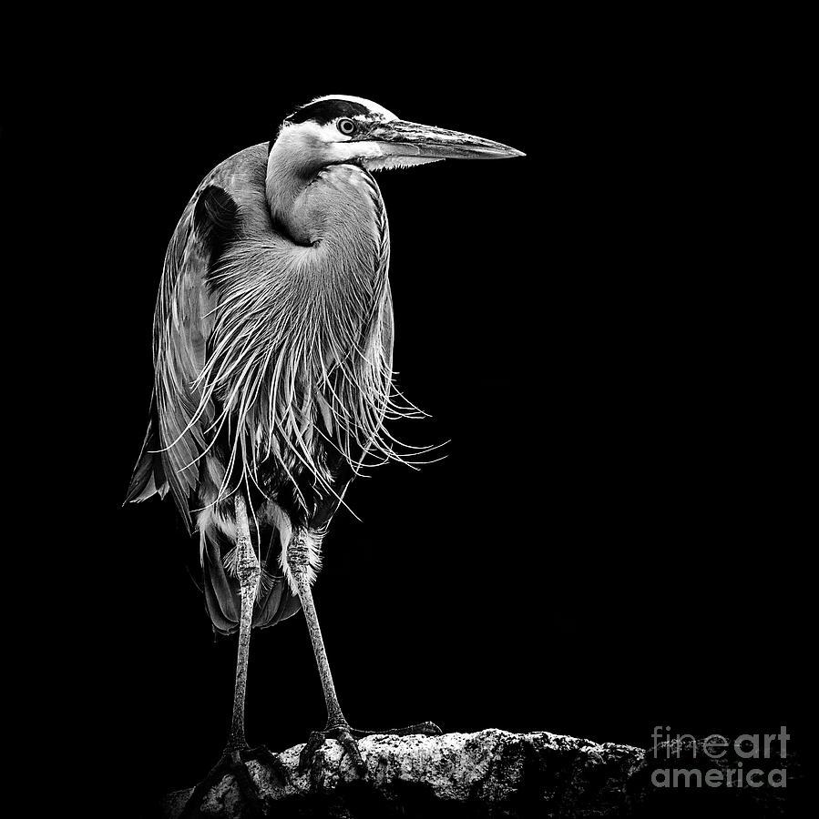 Heron Low Key by Sonya Lang