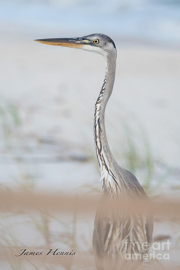 Heron on the Island by Metaphor Photo