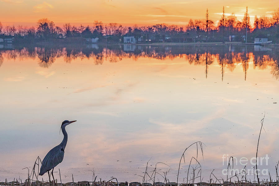 Heron watching sunrise by Casper Cammeraat