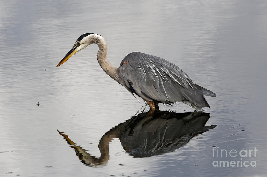 Herons Reflection by Sue Harper