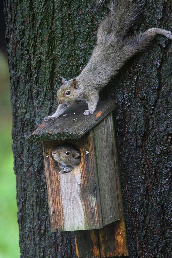 Hey Squirrel by Brook Burling