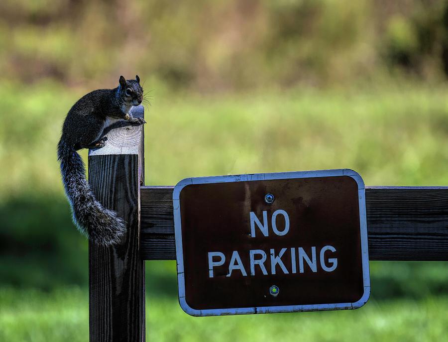 Hey Squirrel No Parking by T Lynn Dodsworth