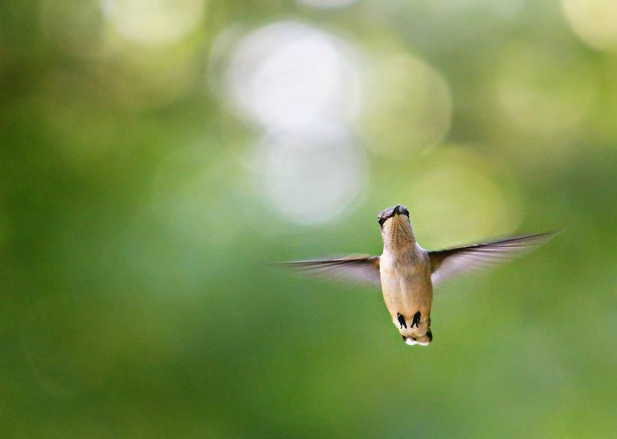 Hummingbird Photograph - Hi by Candice Trimble