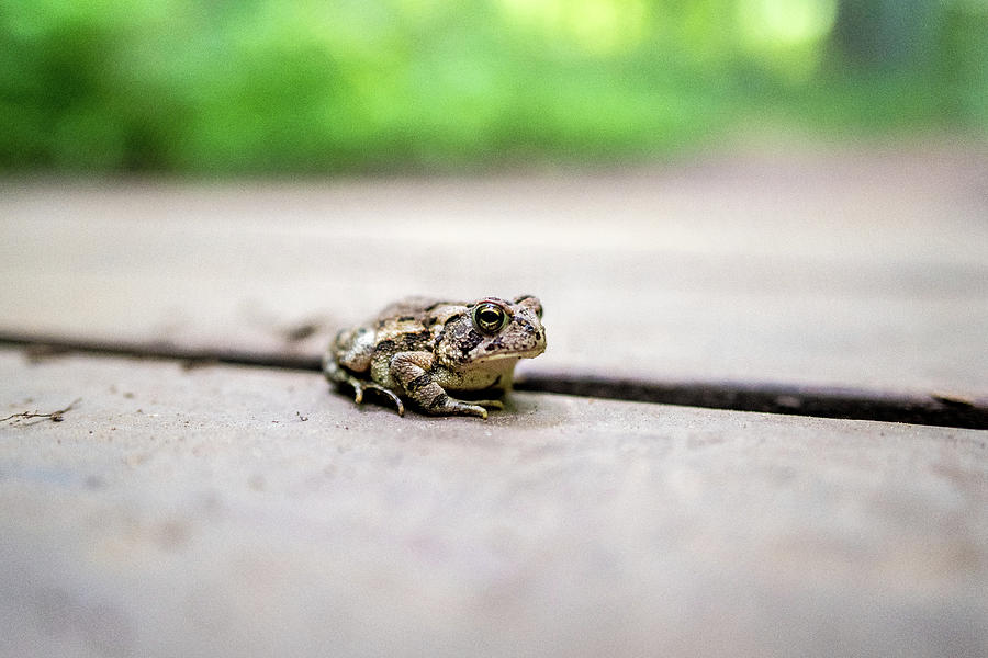 Hi There Toad by Doug Ash