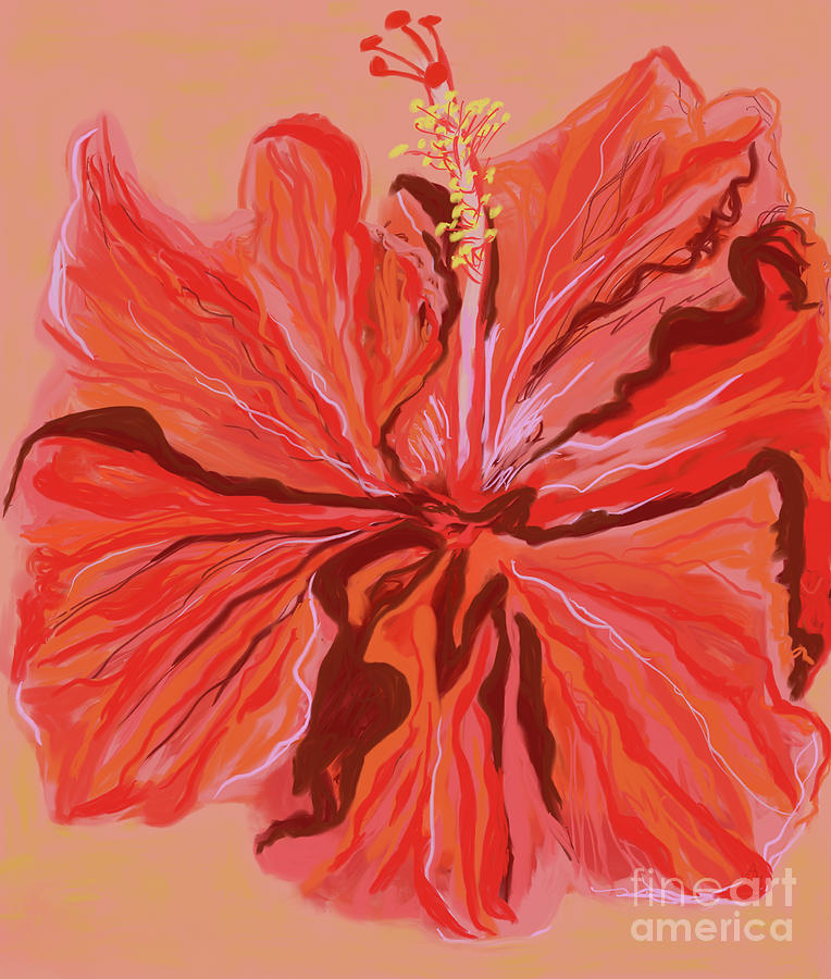 Hibiscus Color Lines by Annette M Stevenson
