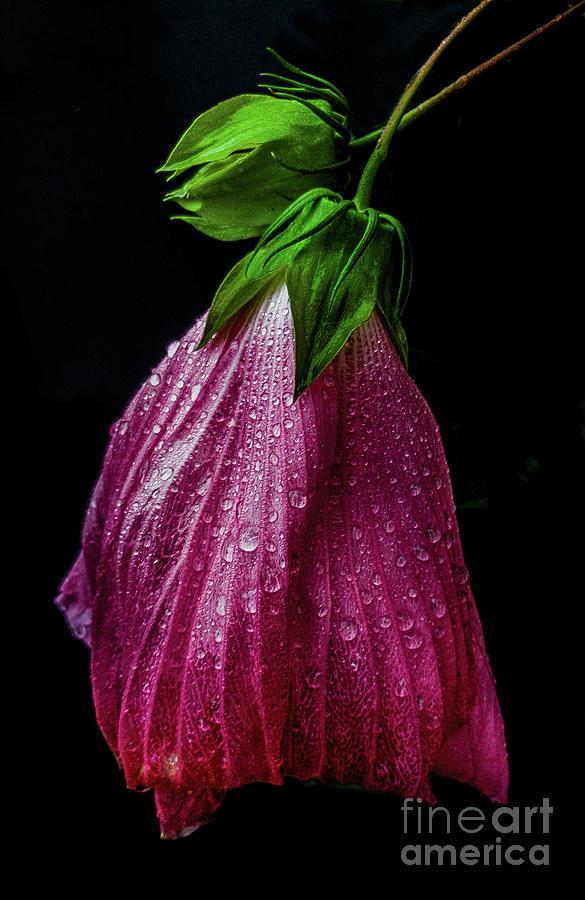 Hibiscus Evening Wear by James Aiken