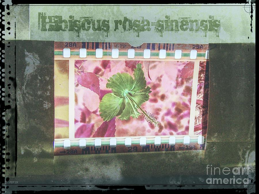 Film Digital Art - Hibiscus Filmstrip by Phil Perkins