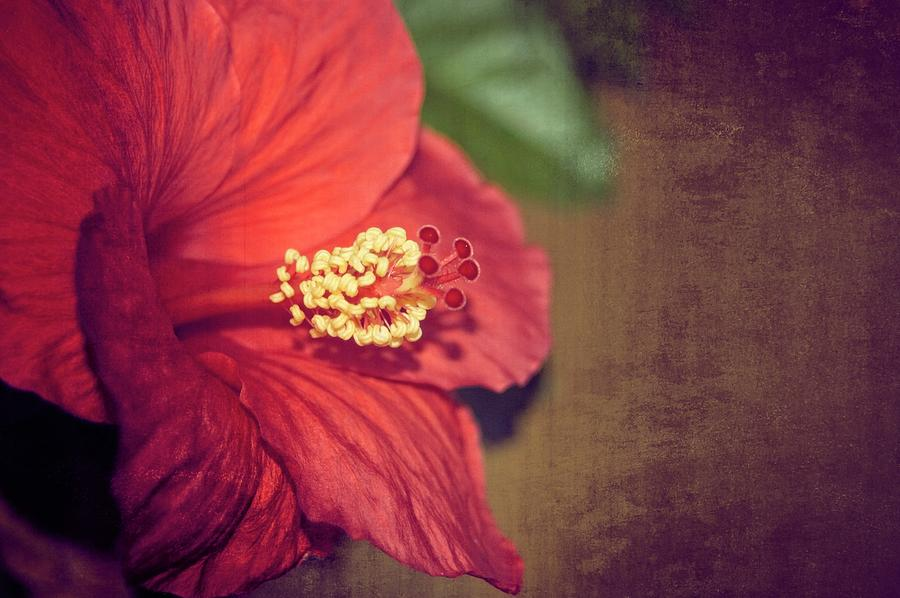 Hibiscus Red by Carolyn Marshall
