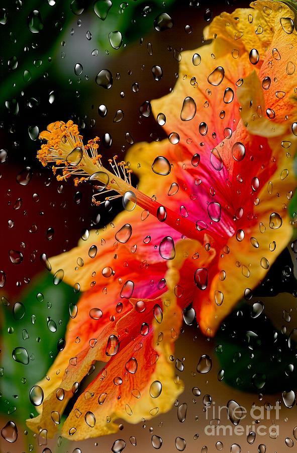 Hibiscus through Raindrops by Kaye Menner by Kaye Menner