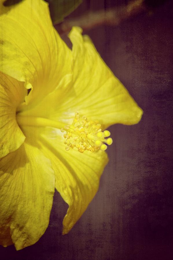 Hibiscus Yellow by Carolyn Marshall