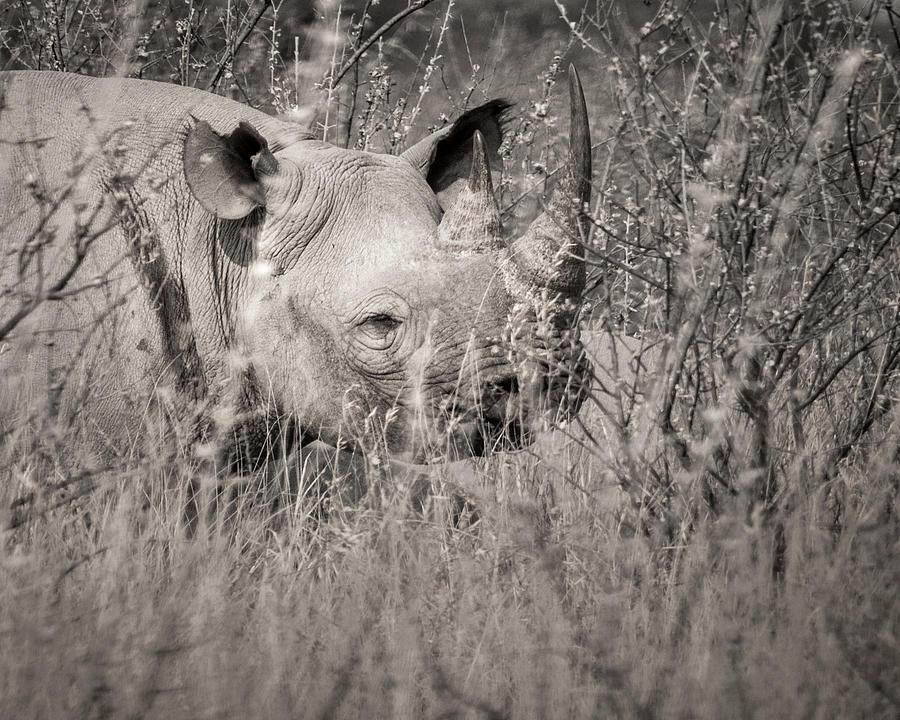 2018 Photograph - Hidden by Dalibor Hanzal