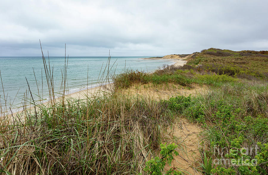 Hidden Shore on Cape Cod by Michelle Constantine