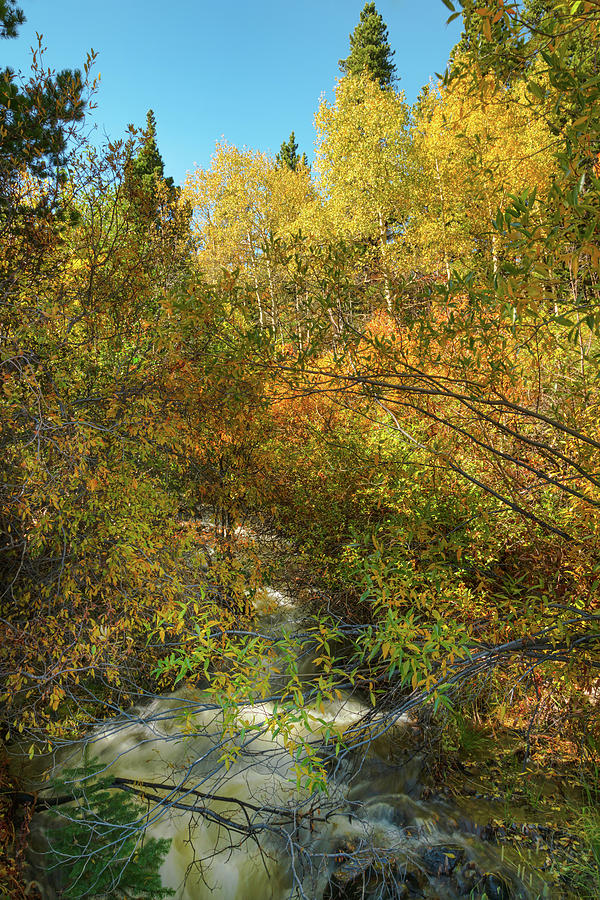 Hidden Stream by James BO Insogna