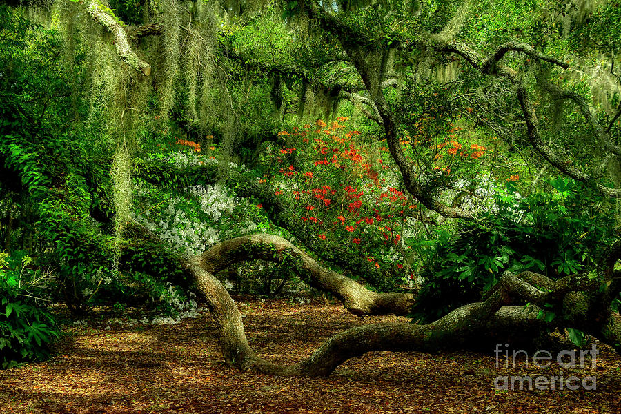Hidden Under The Old Oak Tree by Kathy Baccari