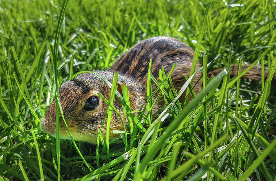 Wi Photograph - Hiding In The Grass by Bill Pevlor
