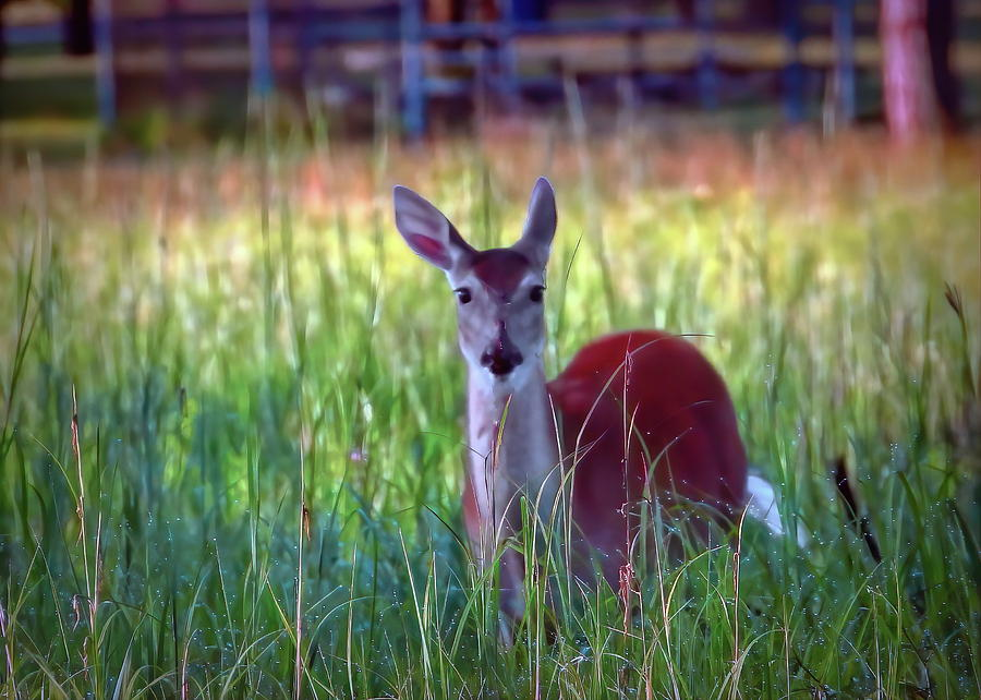 Hiding in the Tall Grass by Jack Wilson