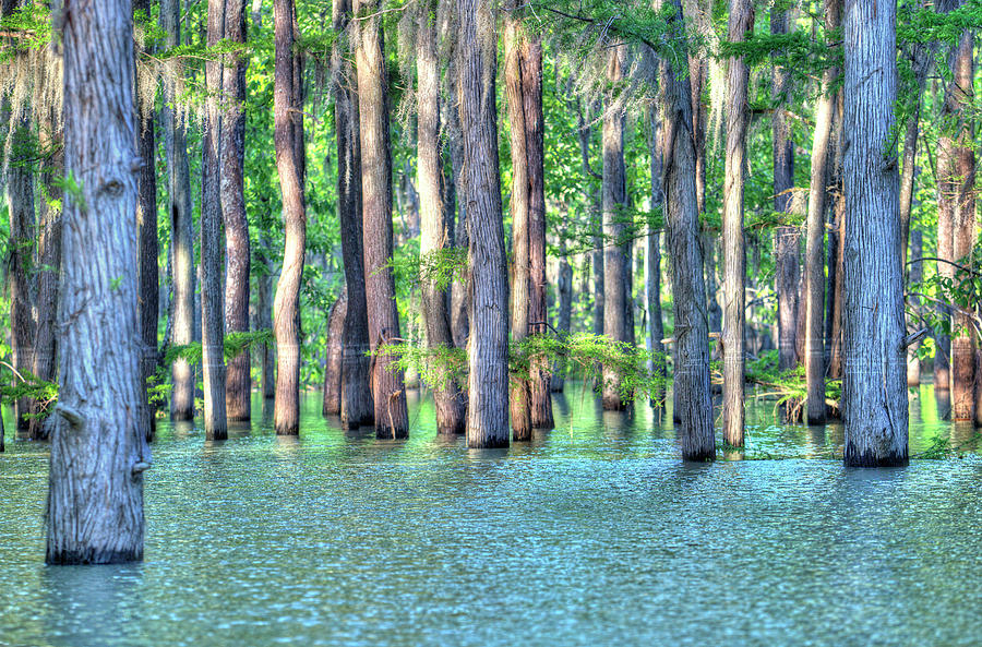 Bayou Photograph - High Bayou Water by Ester Rogers