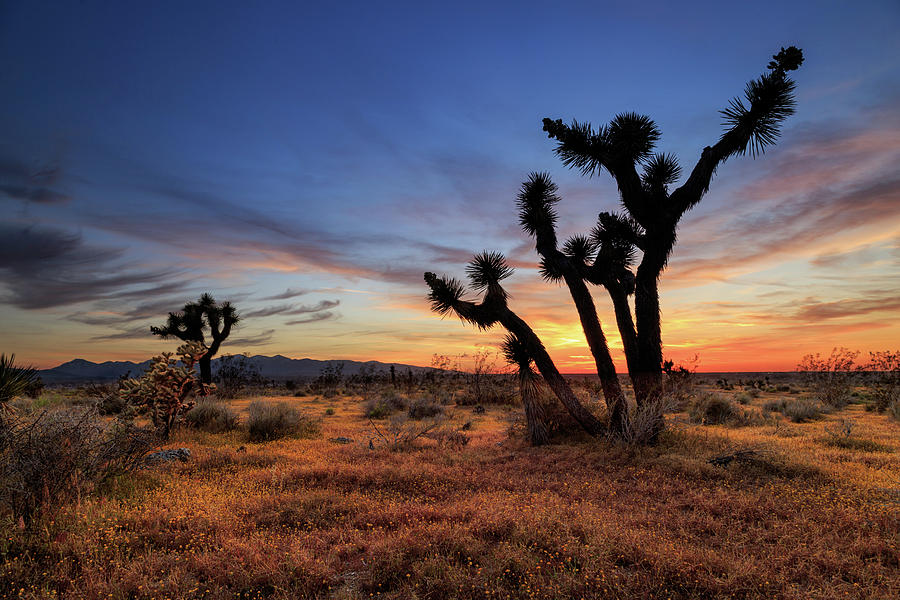 High Desert Sunset by James Eddy