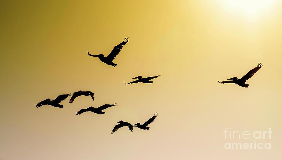 High Flyers by Rochelle Sjolseth