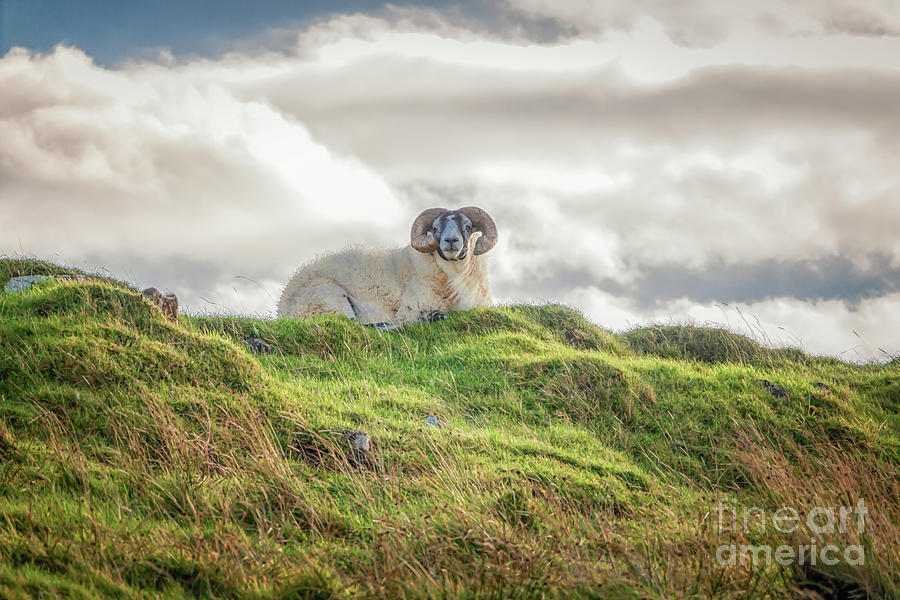 High On The Hill Photograph
