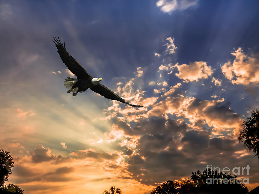High soaring bald eagle by Zina Stromberg