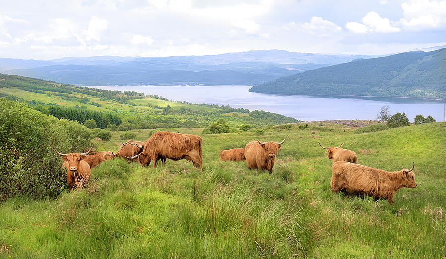 Highland Cattle With Lake In Background Photograph by Andrew Tb Tan