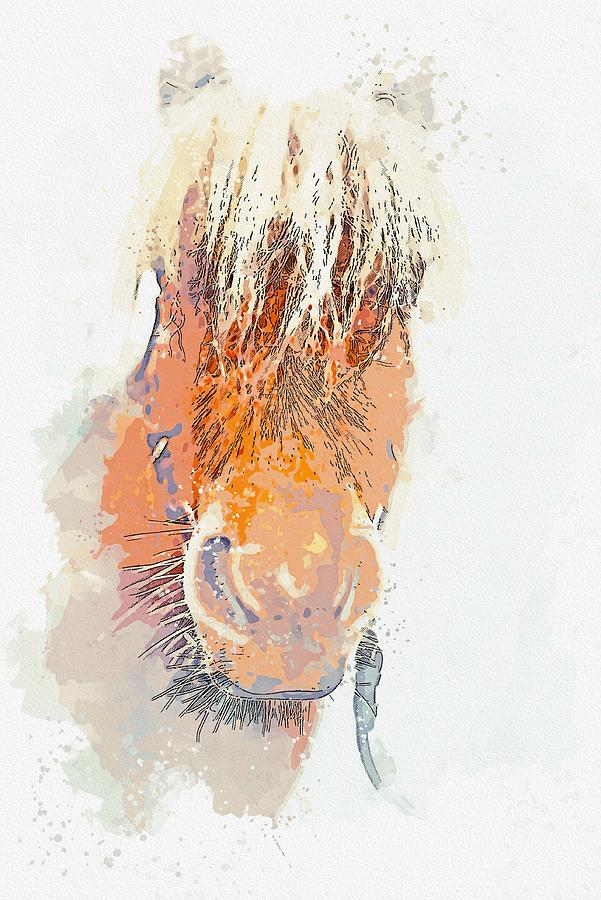 Highland Horse Head -  watercolor by Adam Asar by Adam Asar
