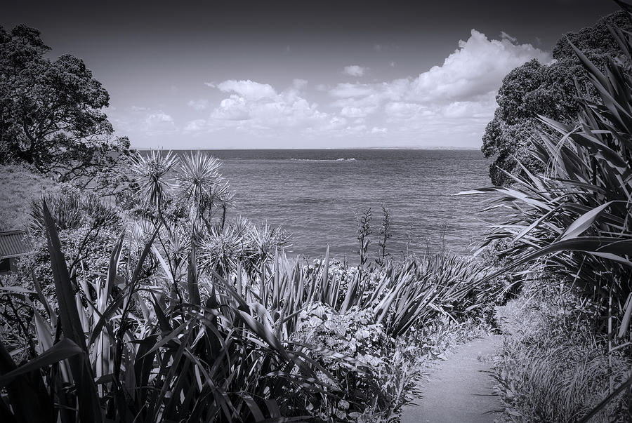 Joan Carroll Photograph - Hiking On Tiritiri Matangi New Zealand Bw by Joan Carroll
