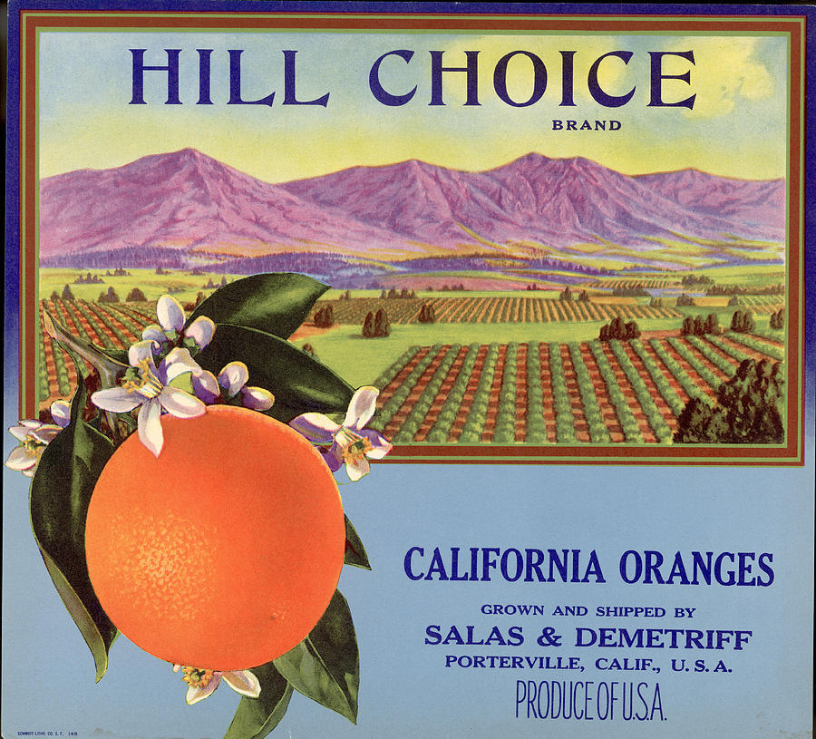 Hill Choice Brand Fruit Box Label Photograph by Hulton Archive