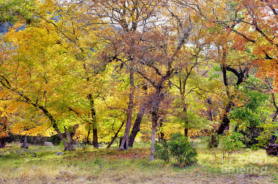 Hill Country Autumn by Gary Richards