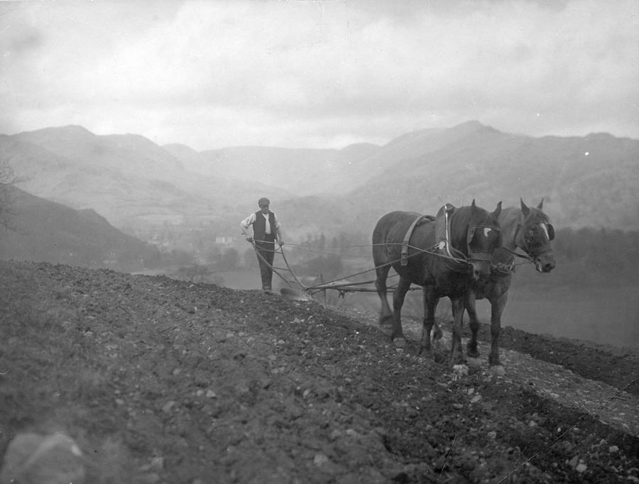 Hill Farmer Photograph by Walmsley Brothers, Ambleside