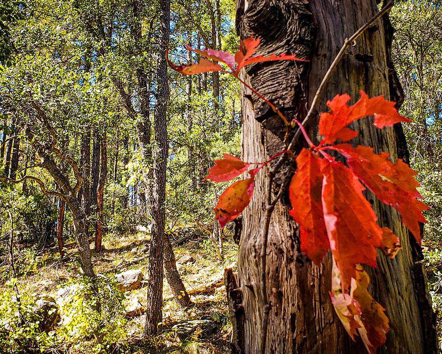 Fall Photograph - Hint of Fall by Bonny Puckett
