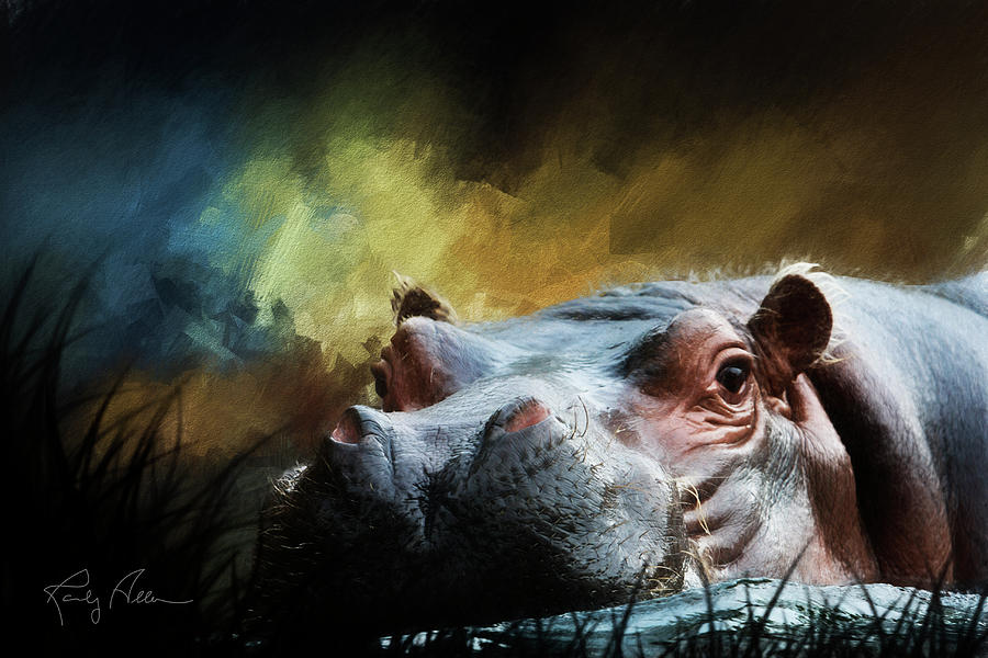 Hippo up close by Randall Allen