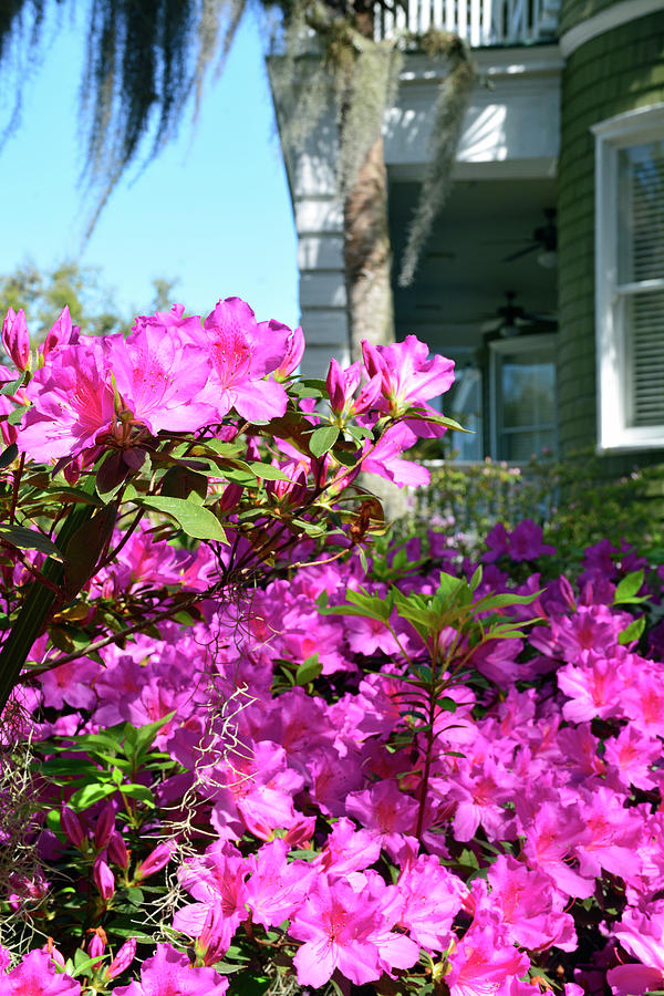 Historic San Souci Cottage and Pink Azaleas on Jekyll Island by Bruce Gourley