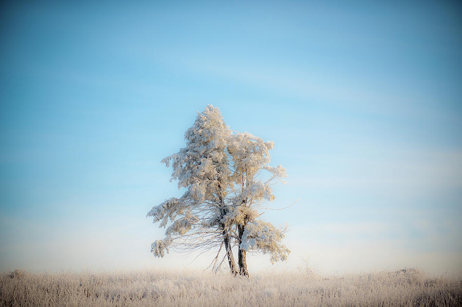 Hoarfrost on the Prairie by Mark Duehmig