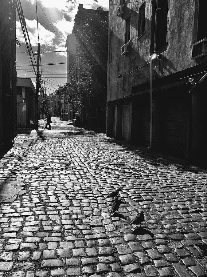 Hoboken Cobblestones by Frank Winters
