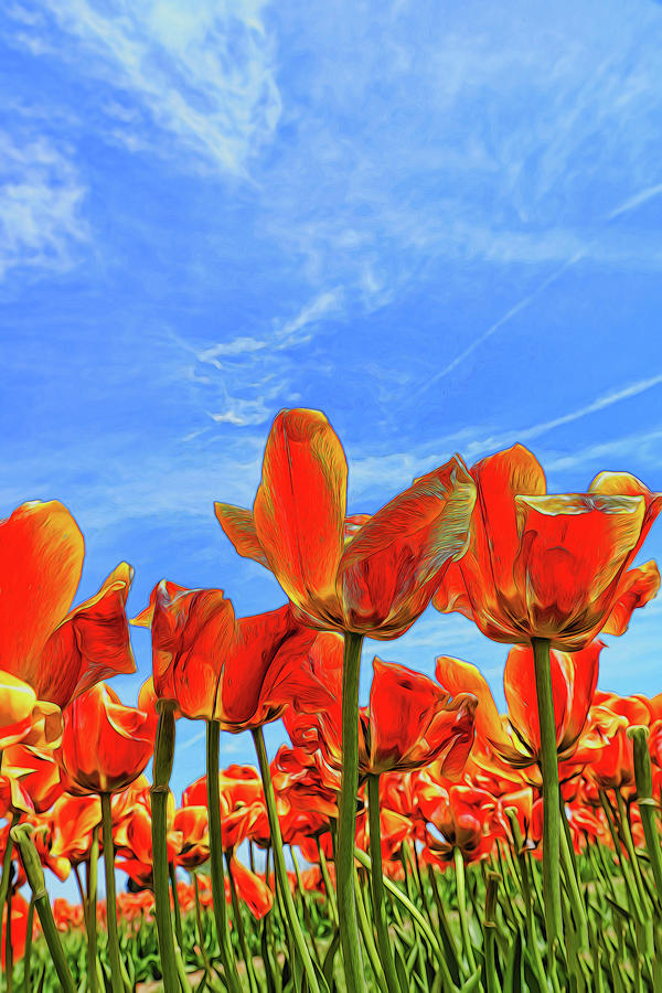 Holland Ridge Tulip Farm # 16 by Allen Beatty