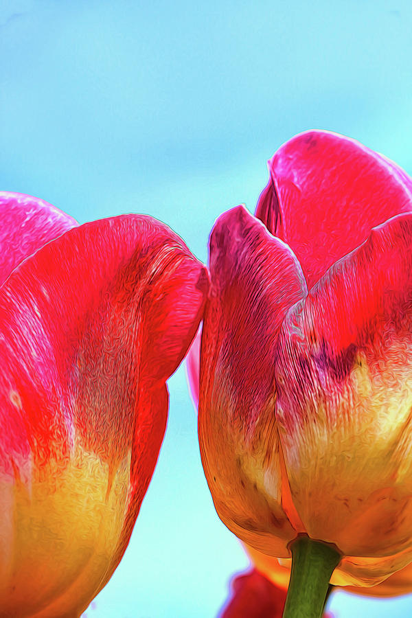 Holland Ridge Tulip Farm # 17 by Allen Beatty
